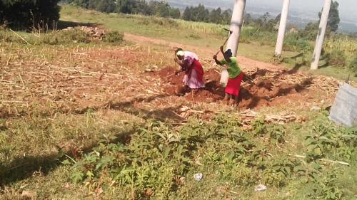 Working the Land in Kenya